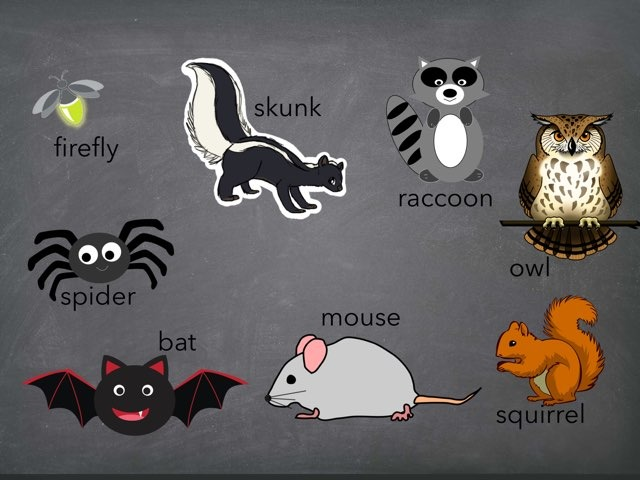 Nocturnal Animal Identification by Mrs