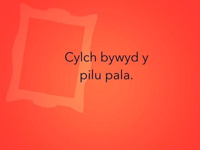 Cylch Bywyd Y Pili Pala Osian Ac Alex  by Heledd Owain