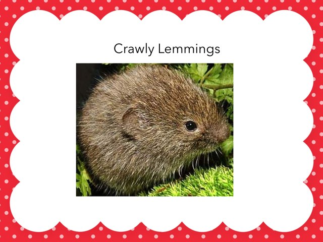Crawly Lemmings by Hulstrom 1st Grade