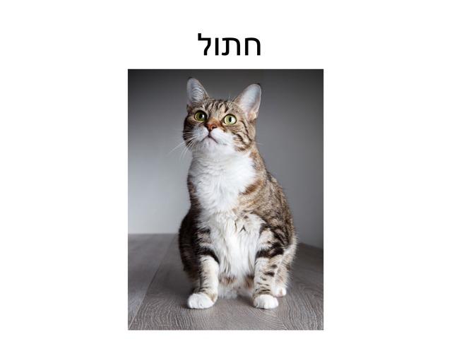 חתול חתולה וחתלתול by dana dagan