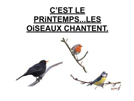 C'est Le Printemps...Les Oiseaux Chantent. by Valerie Escalpade