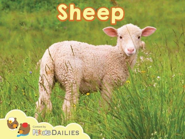 Sheep by Kids Dailies