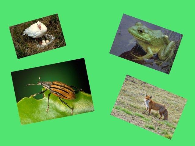 Animals by Alan Crist