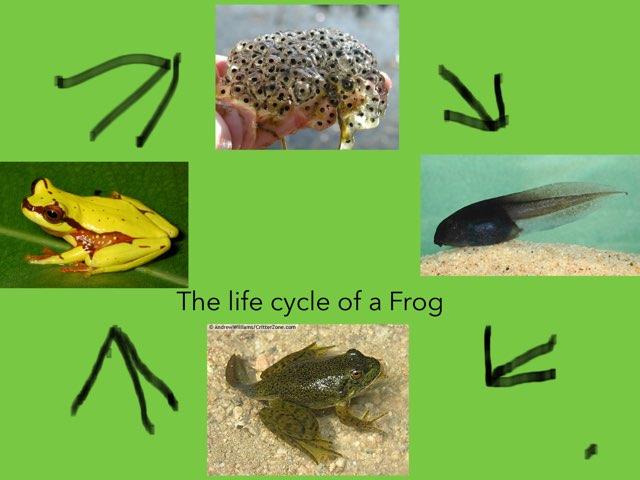 Ndaye Frog by Diana Coyne