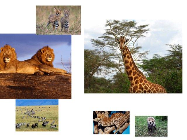 Kenya - Ellis by FarBrook School