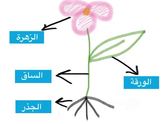 اجزاء الزهرة  by جزوا مفلح