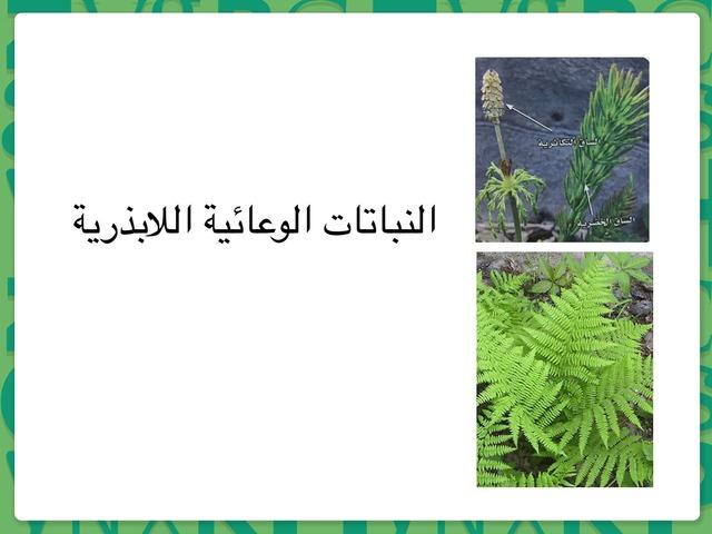 النباتات الوعائية اللابذرية by lama