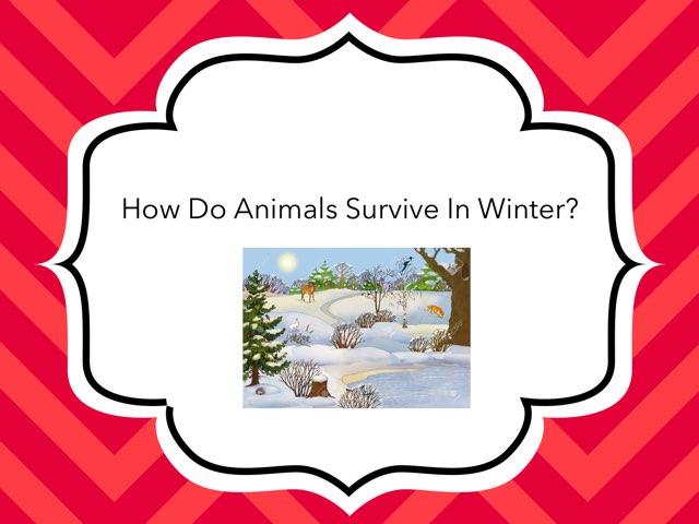 Animals IN Winter by Bretta loeffler