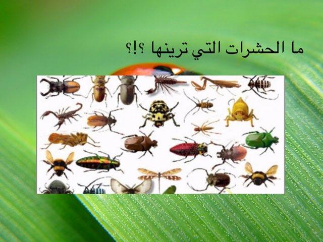 الحشرات by brooy 93