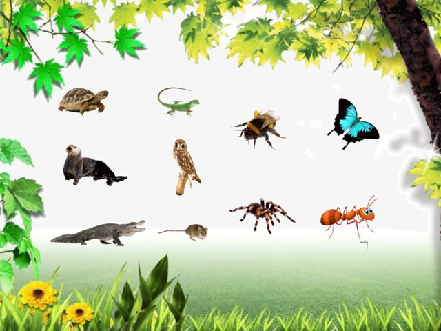 A / An - Animals by Teeny Tiny TEFL