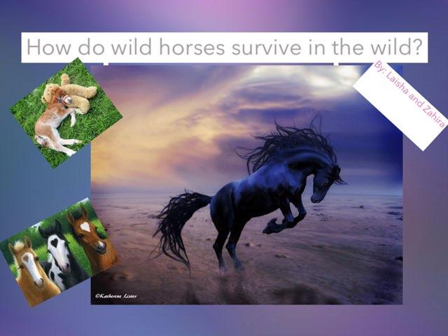 Wild Horses by Jane Miller _ Staff - FuquayVarinaE