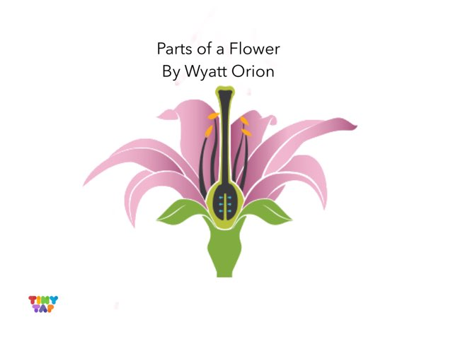 Orion & Wyatt's Flower Parts by Ashley Shaw