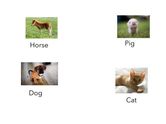 Animals by Jaleh Kan