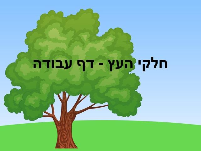 חלקי העץ רמה 2 by Beit Issie Shapiro