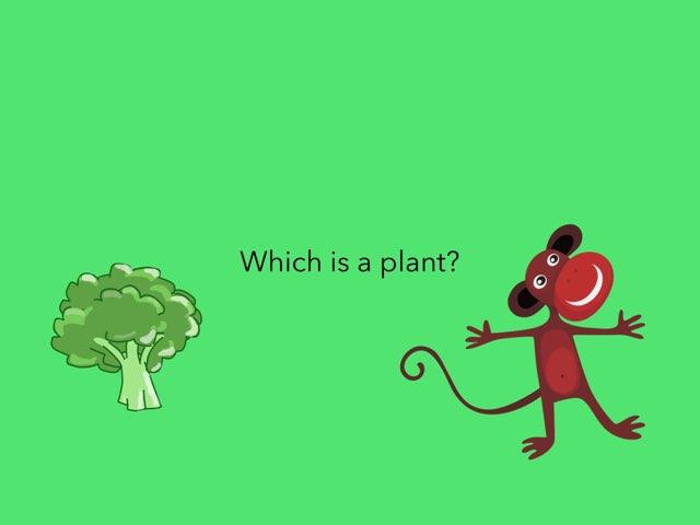 Plant? by Melissa Phelan