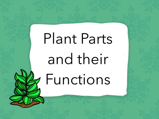 Plant Parts And Their Functions by Brittany Braasch