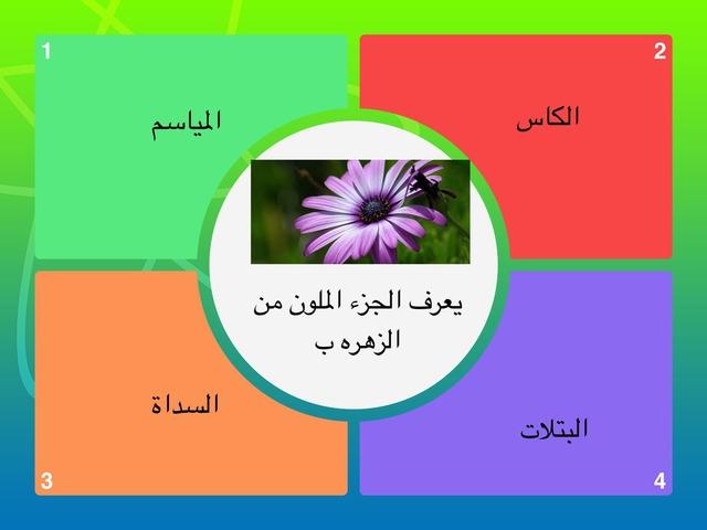 الازهار  by Zooz Ali
