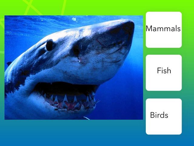 BA 25 Shark Quiz - Duda And Mel by Bilingual Adventure