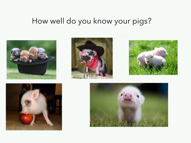 How Well Do You No Your Pigs? by Charley Bergthold