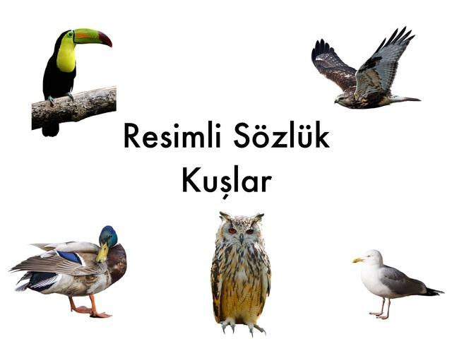 Resimli Sözlük - Kuşlar by Hadi  Oyna