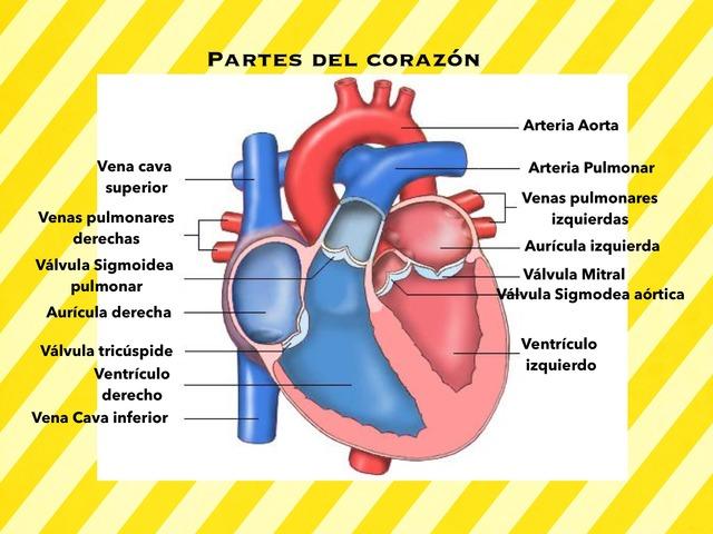 Partes Del Corazón by Maria Barcala Estefania