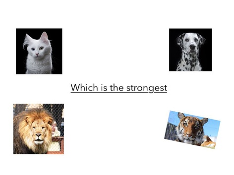 Which One Is The Strongest One by Abdullah