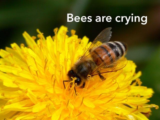 Bees are crying by Tina zita
