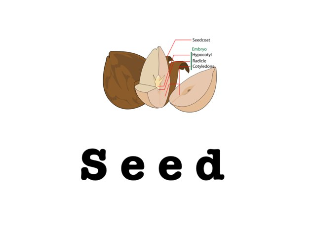 A Seed Grows  by Karly Reigel