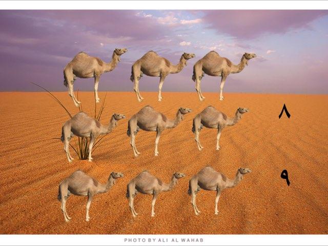 عدد٩ خبرة البر  by Reem altawari