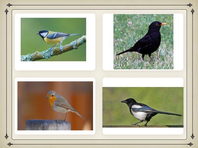 Oiseaux du jardin by École maternelle Riez