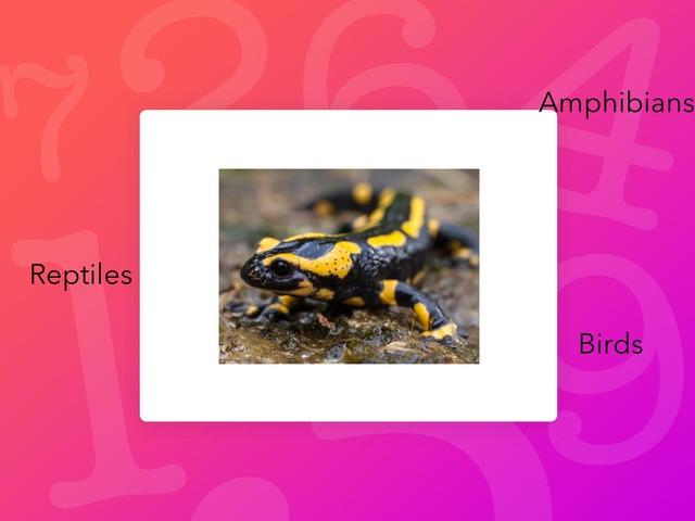 BA 24 A - Salamanders - Ester and Catarina by Bilingual Adventure