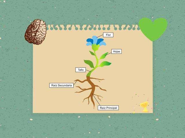 Escribe Las Partes De La Planta by Helios Rivero Ramos