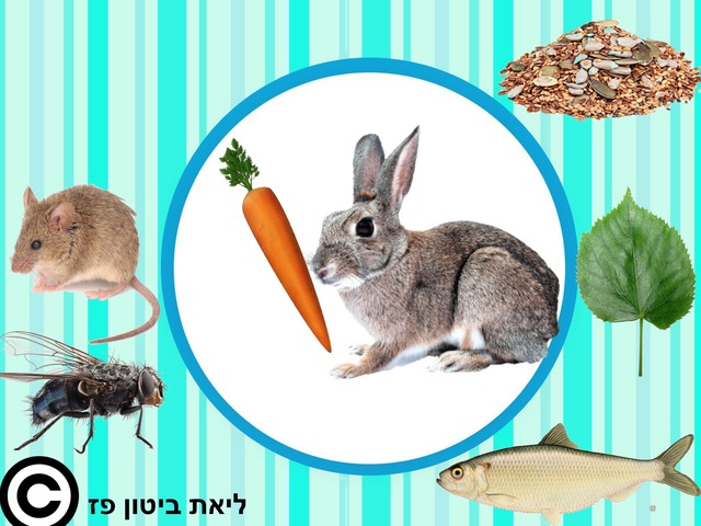 מזונם של בעלי החיים 2 by Liat Bitton-paz