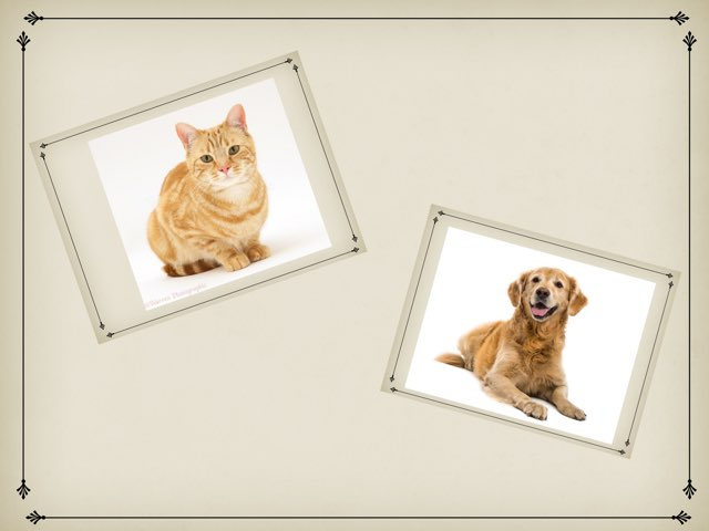 Level 2 Direction Following Game For Pets Theme by Seana Evelyn
