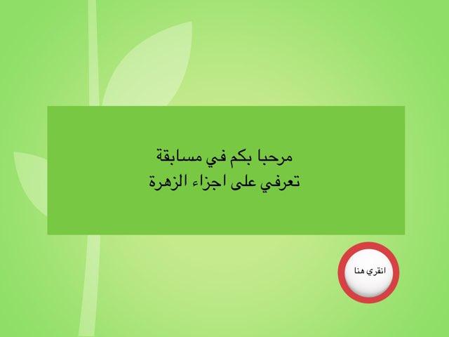 اجزاء الزهرة by na as