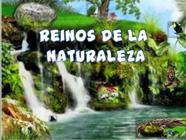 Los 5 Reinos  by Angela Romo