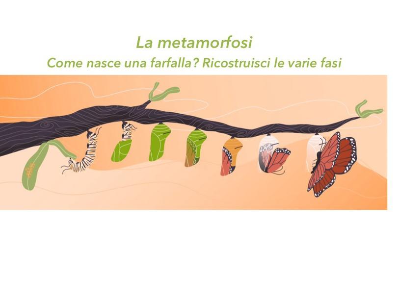 La Metamorfosi by Primaria Interattiva