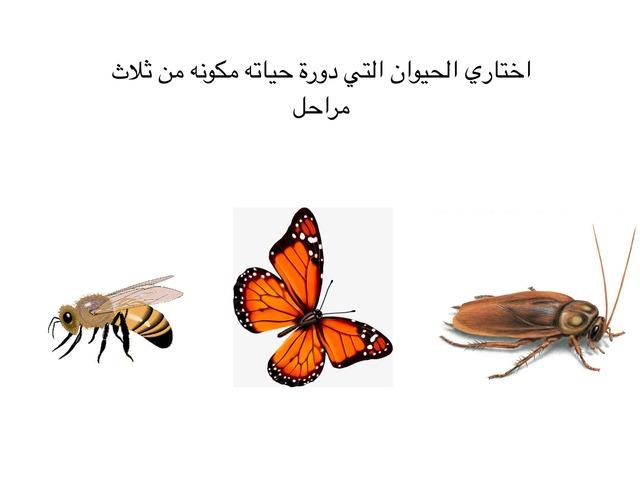 لعبة  الحشرات  by hanan alhashemi