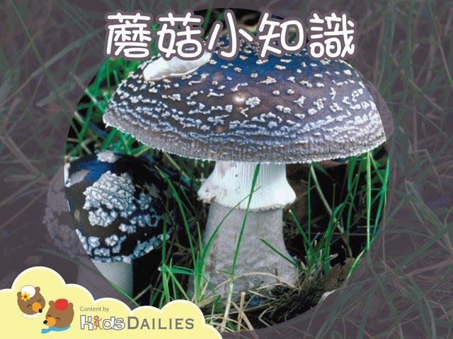 與蘑菇有關的小常識 by Kids Dailies