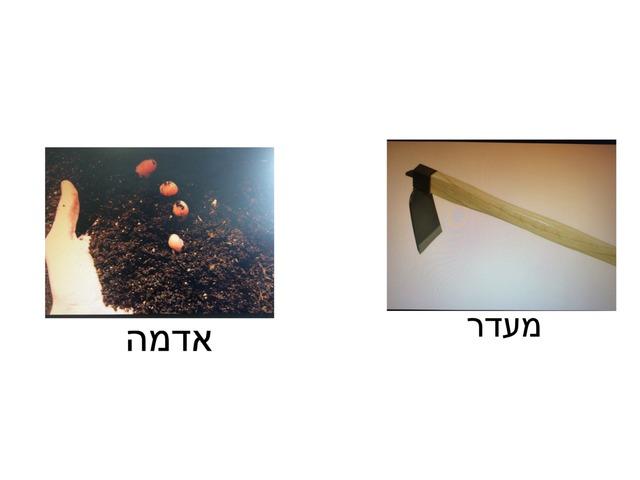 שיעור גינון זיהוי - ״תראה לי״ by אלוט חיפה
