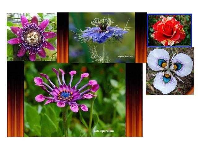 Fleur  by Lin