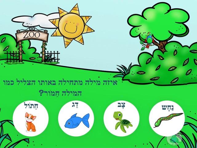 ניתאי by Yuval Hazan