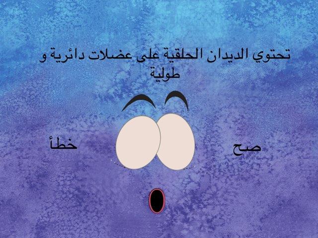 الديدان الحلقية by Shaimaa Mohammed