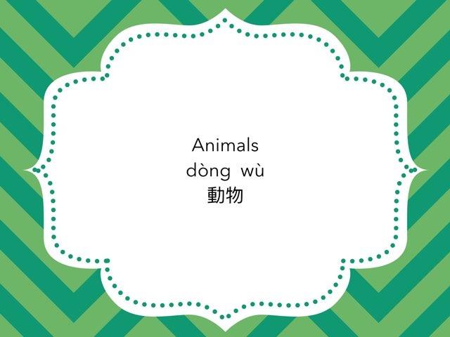 Animals by Chiu-Ping Lin