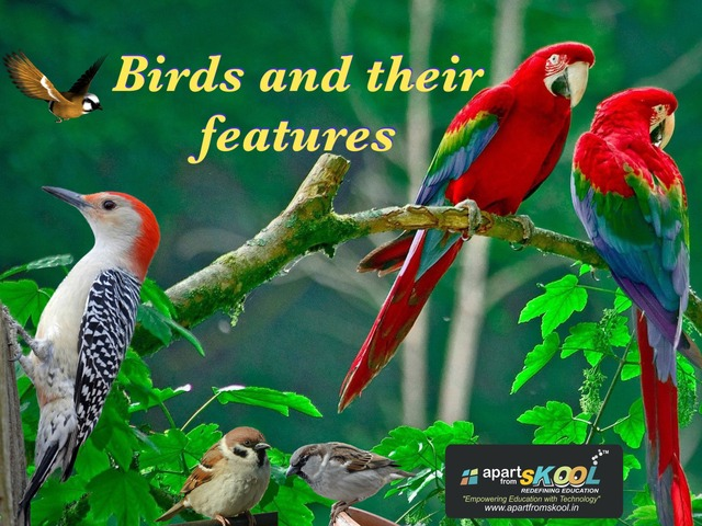 Birds And Their Features  by TinyTap creator