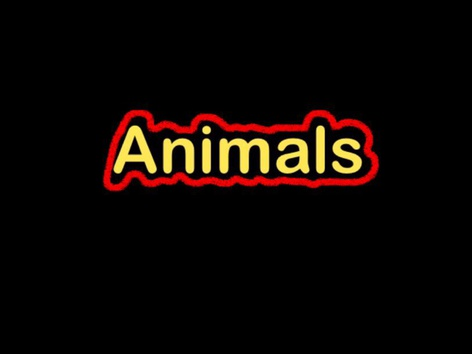 CVI: Animals  by Eunice Ramirez