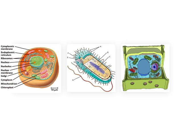 Organelles Structure And Function by Sarah Howard