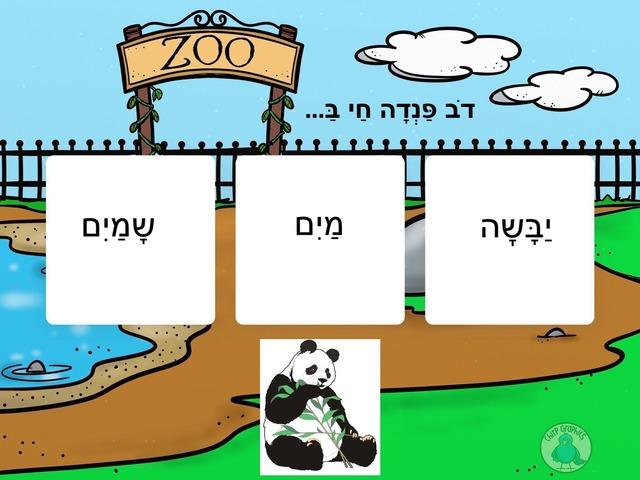 איפה חיות החיות? by Aviva Illouz
