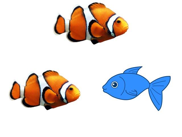 התאמת דגים by רינת ידגר