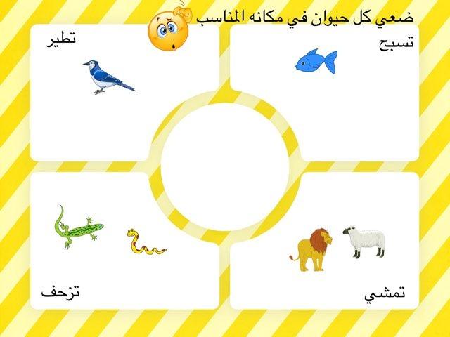 حركة الحيوانات by أروى العجمي